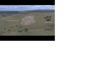 Sheep3_3